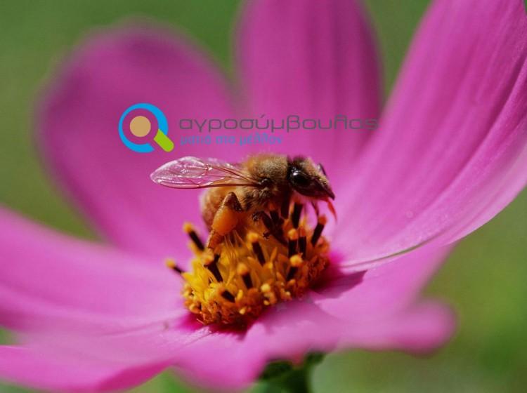 Έκδοση Μελισσοκομικού Βιβλιαρίου   Αγροσύμβουλος