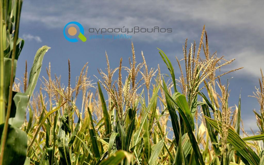 Νέοι Αγρότες 2013 -2014 | Επιδότηση 20.000€ | Αγροσύμβουλος