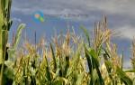 Νέοι Αγρότες 2013 – 2014 | Επιδότηση έως 20.000€