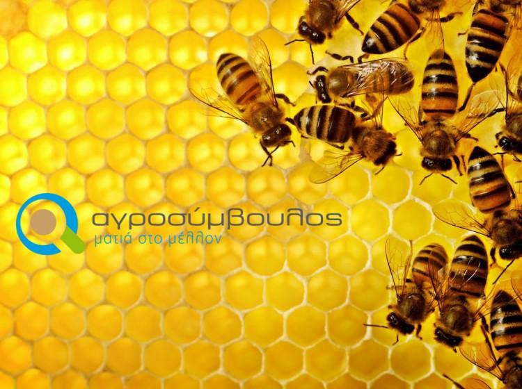 Μελισσοκομία | Αγροσύμβουλος