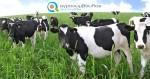 Νομιμοποίηση Σταυλικών – Κτηνοτροφικών Εγκαταστάσεων