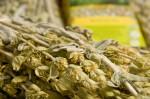 Καλλιέργεια Τσάι του Βουνού
