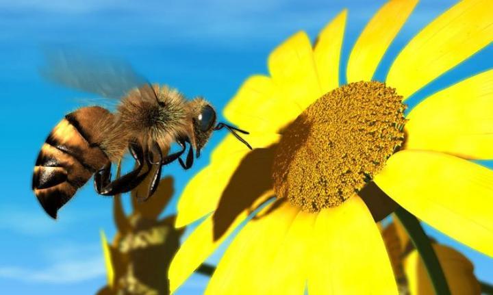 Λειτουργία Κέντρων Μελισσοκομίας   Υπογραφή Απόφασης   Αγροσύμβουλος Ο.Ε.