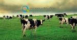 Μελέτη ίδρυσης κτηνοτροφικής μονάδας