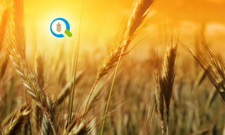 αγρότες και κτηματίες σε απευθείας σύνδεση
