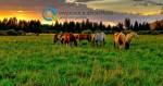 Αγροτουρισμός | Πλεονεκτήματα και Προγράμματα Ενίσχυσης