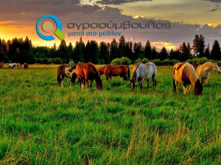 Αγροτουρισμός | Πλεονεκτήματα και Προγράμματα Ενίσχυσης | Αγροσύμβουλος