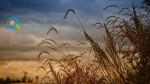 Δικαιώματα σε νέους γεωργούς και κτηνοτρόφους