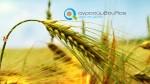 Υποβολή Φακέλων Νέων Αγροτών  Τα επόμενα βήματα