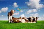 Αποστάσεις Κτηνοτροφικών Εγκαταστάσεων