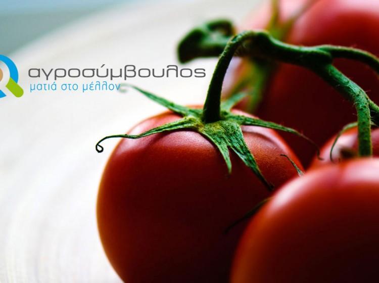 Καλλιέργεια Τομάτας| Αγροσύμβουλος