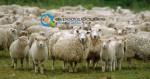 Μελέτη Ιδρυσης Προβατοτροφικής Εκμετάλλευσης