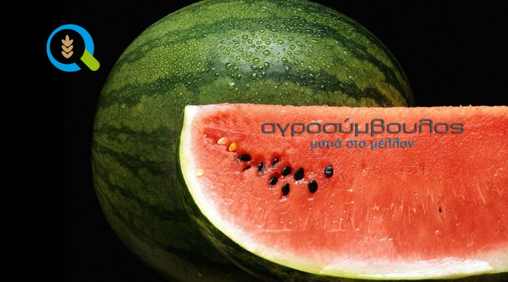 watermelon_agrosimvoulos