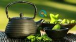 Αρωματικά Φυτά   Βήματα Επιτυχημένης Καλλιέργειας