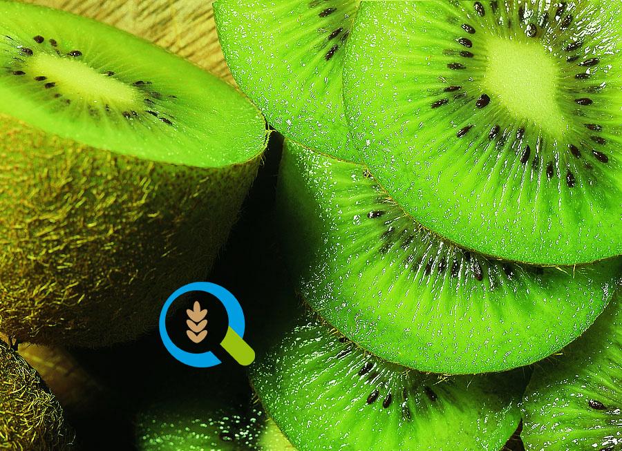 Καλλιέργεια Ακτινιδίων | Αγροσύμβουλος