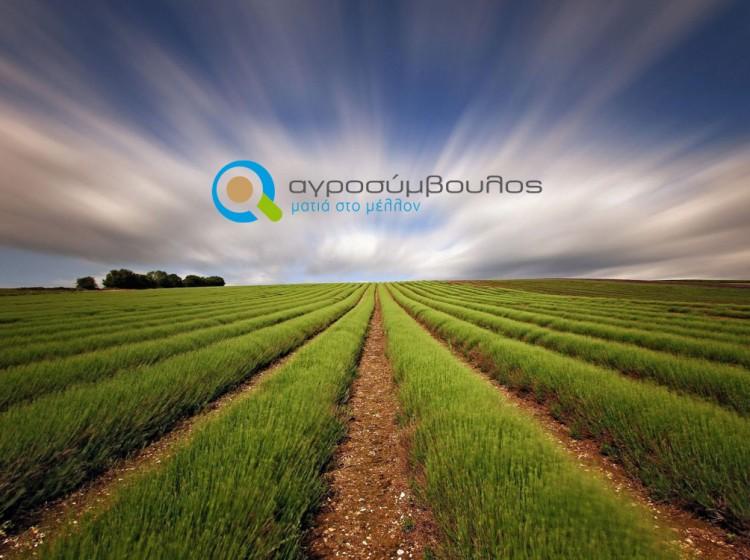 Μακροχρόνιες Υποχρεώσεις Νέων Αγροτών | Αγροσύμβουλος