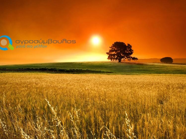 Μακροχρόνιες Υποχρεώσεις   Σχέδια Βελτίωσης   Αγροσύμβουλος