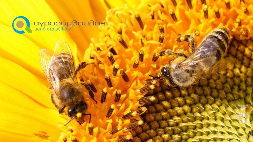 Κανόνες της Ορθής Μελισσοκομικής Πρακτικής | Αγροσύμβουλος