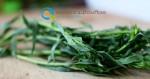 Καλλιέργεια Εστραγκόν | Καλλιεργητικές Τεχνικές