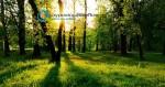 Κριτήρια Επιλεξιμότητας Αγρών | Δάσωση Αγροτικών Γαιών