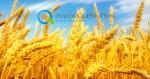 Συνδεδεμένες Ενισχύσεις Φυτικής Παραγωγής | Νέα ΚΑΠ