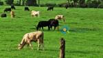 Δεδομένα Κτηνοτροφικών Κλάδων στην Ελλάδα