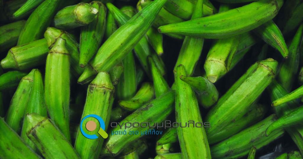 Καλλιέργεια Μπάμιας | Αγροσύμβουλος