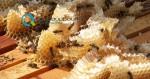Μέτρα Στήριξης Μελισσοκομίας 2015
