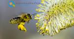 Μελισσοκομία | Δικαιολογητικά Συμμετοχής