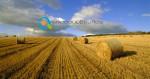Νέοι Αγρότες 2016 | Απαιτούμενα Στρέμματα ανά Καλλιέργεια