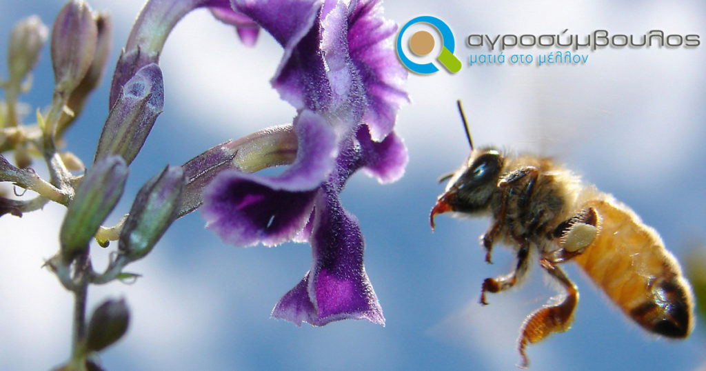 μέλισσες μεγάλο πουλί
