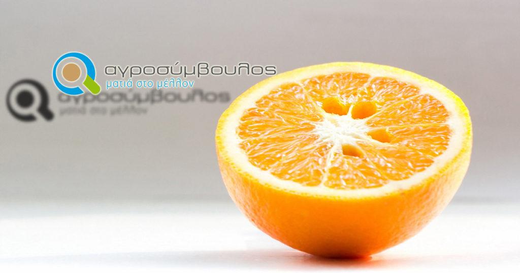 Orange evergetikes