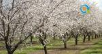 Κρίσιμοι παράγοντες στην ανάπτυξη δενδρωδών καλλιεργειών