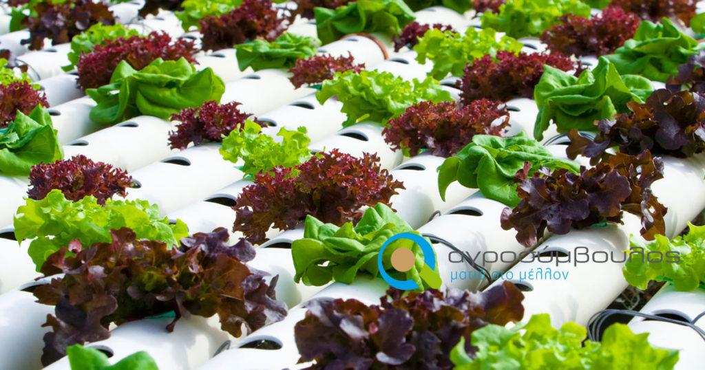 hydroponic-garden