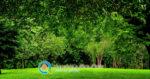 Χρήση Γεωργικών Εκμεταλλεύσεων σε Δασικές Εκτάσεις