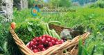 Κατάλογος Επιλέξιμων Καλλιεργειών | Απονιτροποίηση 2018