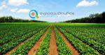 Γεωργικοί Σύμβουλοι | Νομοθεσία
