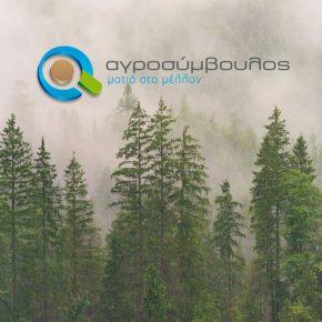 Υπομέτρο 8.4   Αποκατάσταση Ζημιών σε Δάση