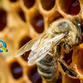 Άμεση προμήθεια μικρών ποσοτήτων μελιού | Μελισσοκομία