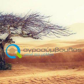 Παγκόσμια Ημέρα για την Καταπολέμηση της Ερημοποίησης και της Ξηρασίας  17 Ιουνίου