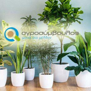 Φυτά διακόσμησης εσωτερικού χώρου