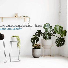 Φυτά διακόσμησης εσωτερικού χώρου   Προτάσεις και φροντίδα
