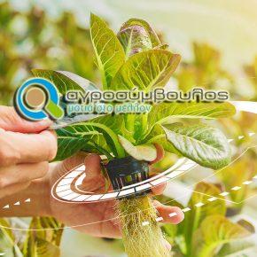 Πλεονεκτήματα της Υδροπονικής Καλλιέργειας